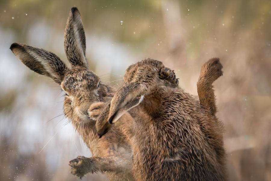 Movement in Nature – Photo contest