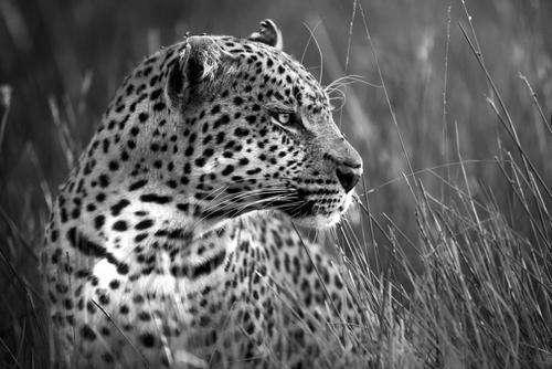 Endangered Species – Photo contest